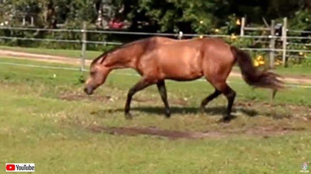 horsenbutterfly3_640