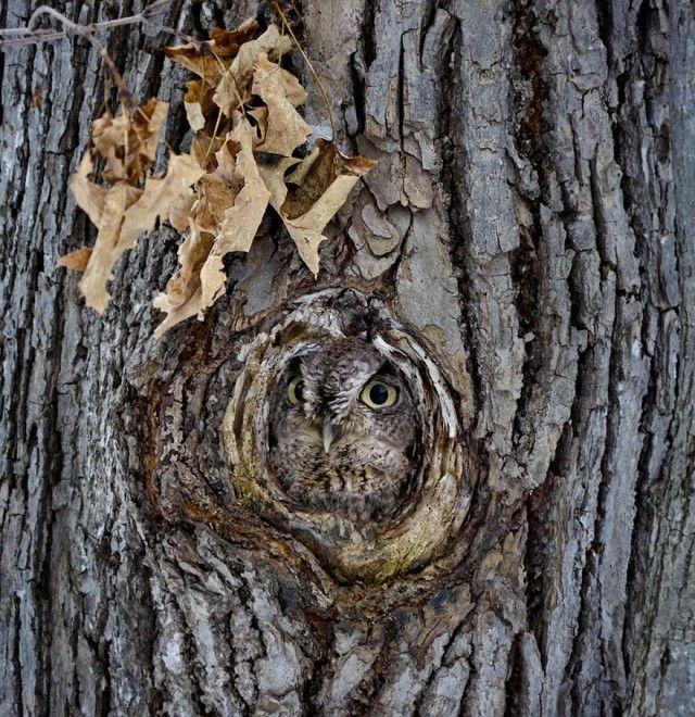 owl-photography-19__880_e