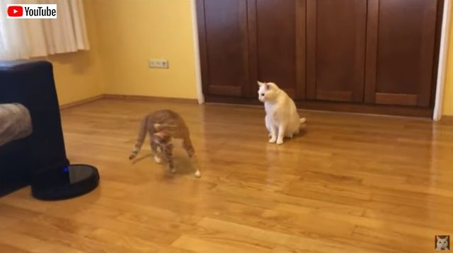 catsnroomba2_batch