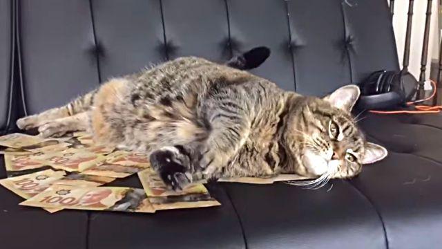 moneycat3