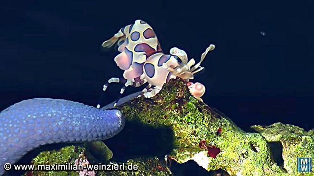 starfish5