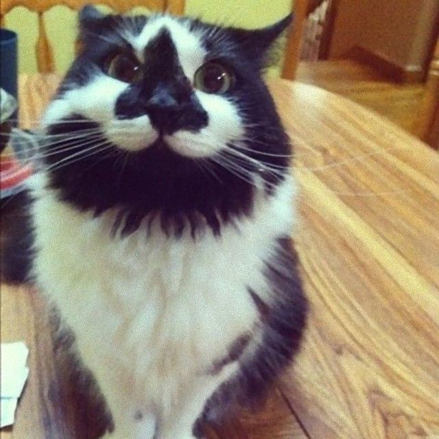 mustaches8_e