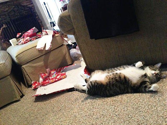 XX-animals-destroying-Christmas-6__605_e