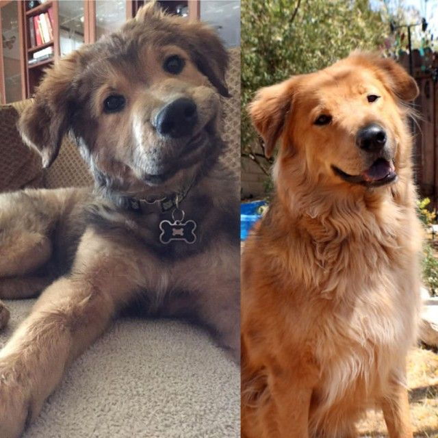 dog-all-grown-up_e