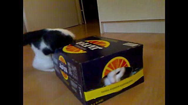 kittenbox5