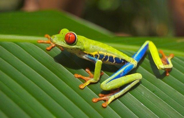 tree-frog-69813_960_720-1_e