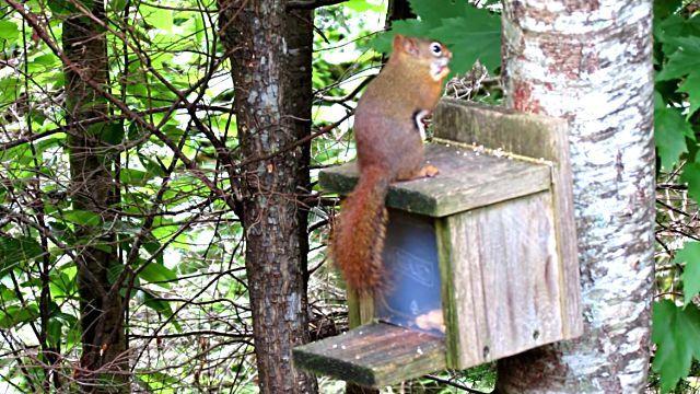 SquirrelSmashesThumb4