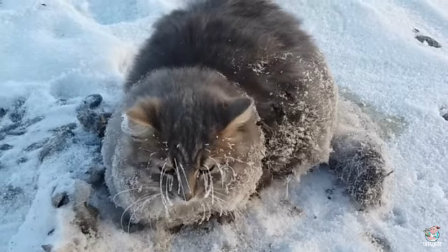 frozencat1