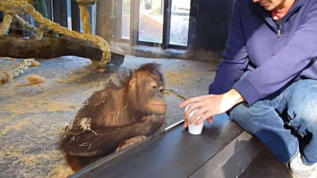 orangutanmagic0