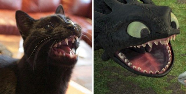 cats-toothless-lookalikes-31-57cec01070e8d__700_e