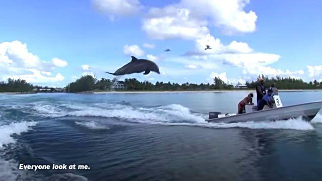 dolphinshark10