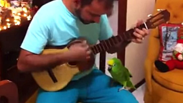 singingparrot2