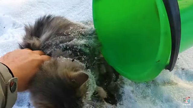 frozencat7