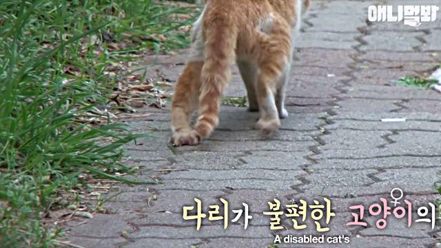 bodyguardcat1