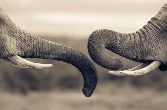 elephant11_e