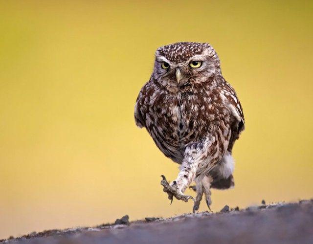 owl-photography-10__880_e