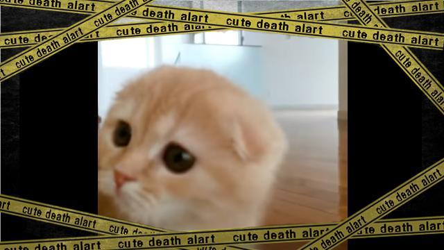 cat-4 [www-frame