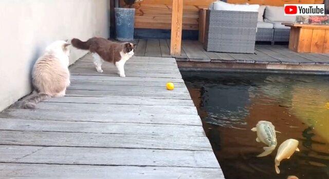 catsnfish1_640