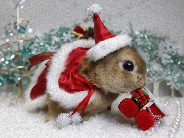 Cute-Christmas-Animal-Bunny-Santa-Hat-Suit_e