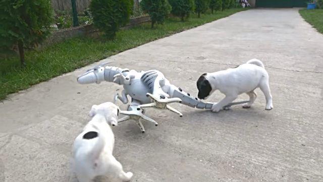 puppiesnrobot5