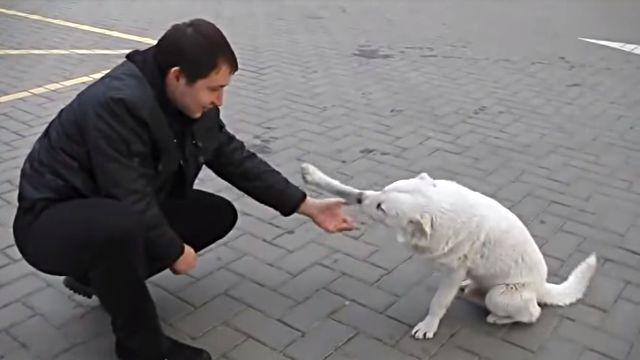 straydog3