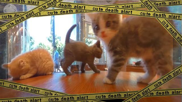 cat-f2 [www-frame