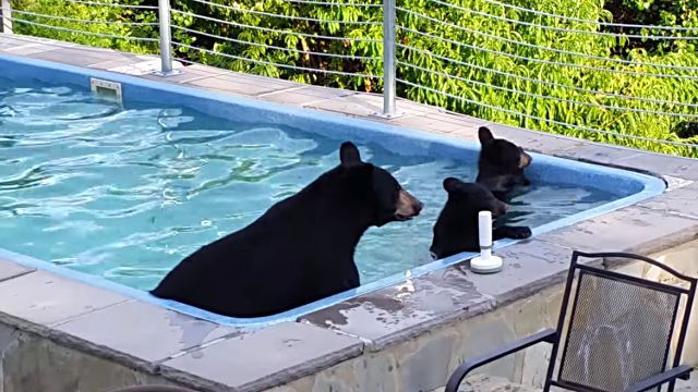 bearinpool3