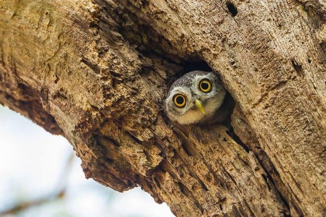 owl-photography-23__880_e
