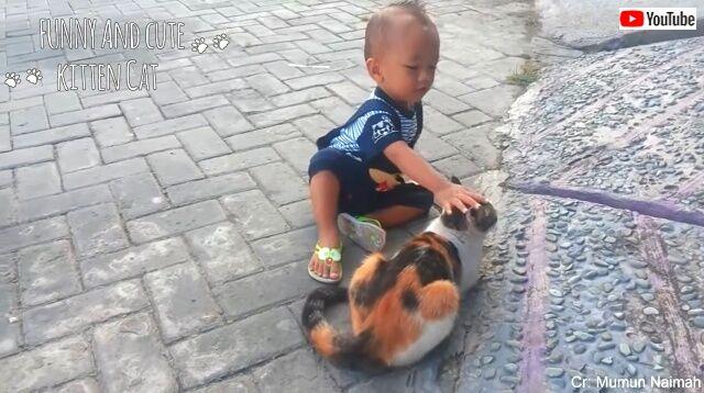 babiesncats6_640