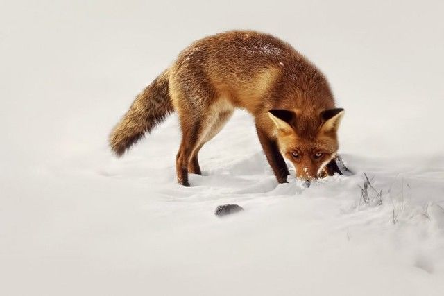 fox8_e