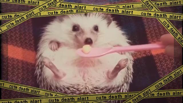 hedgehog-f [www-frame
