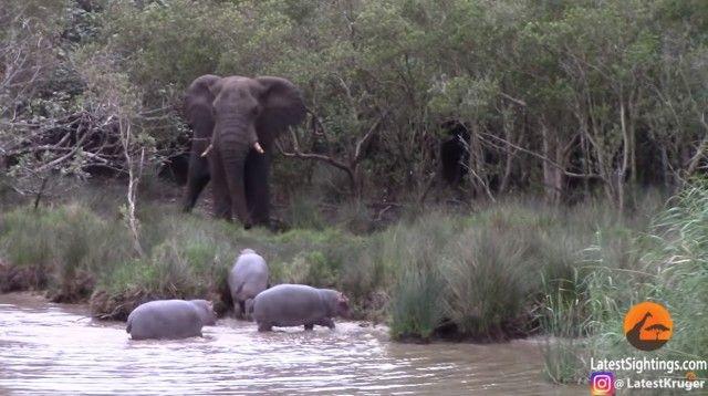 elephantnhippos2_e