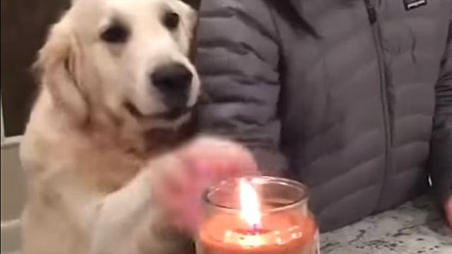 protectivedog1