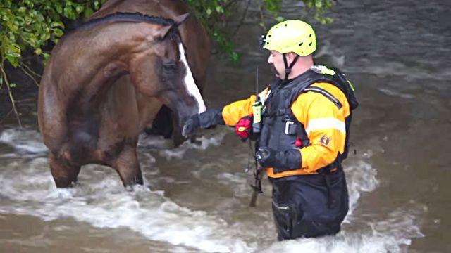 floodhorse4