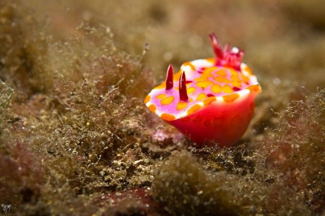 beautiful-unusual-sea-slugs-27__880_e