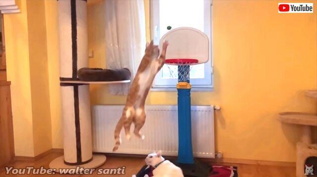 basketballcats2_640