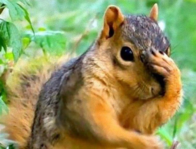 animatedsquirrels13_ea