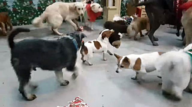 santadogs3