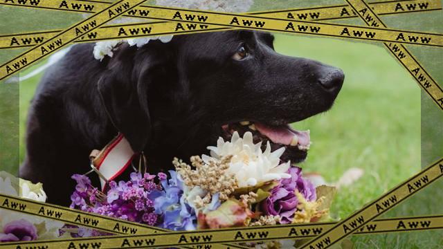 dog-5_e-frame
