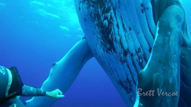swimwithwhales8_e