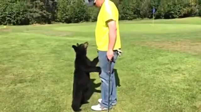 golfbear4