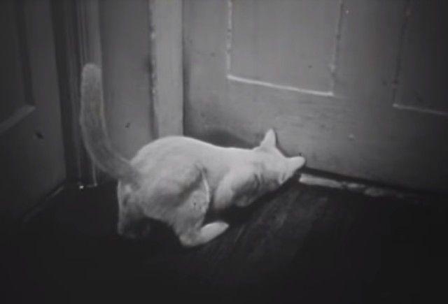 1947cats10_e