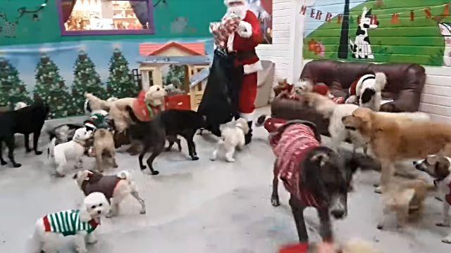 santadogs2