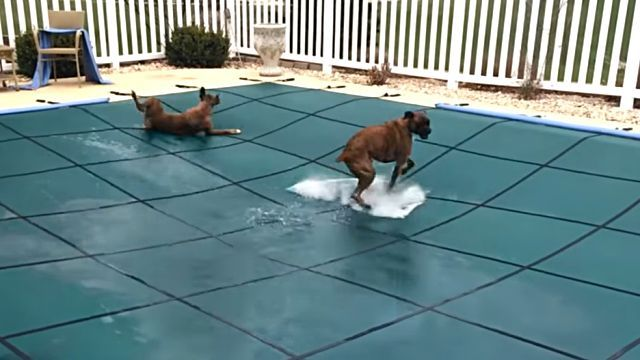 poolcover2