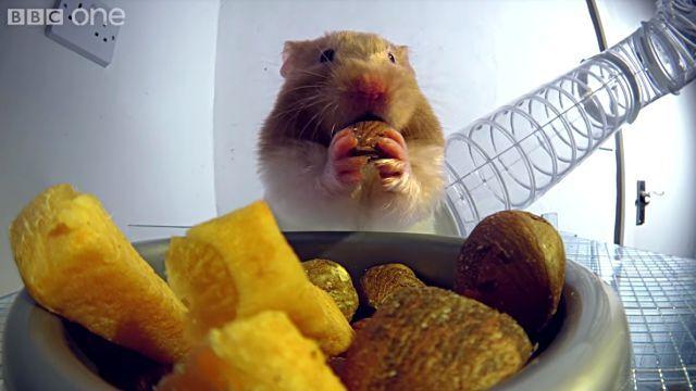 hamsterscheeks2