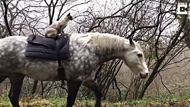 horseridingcat5