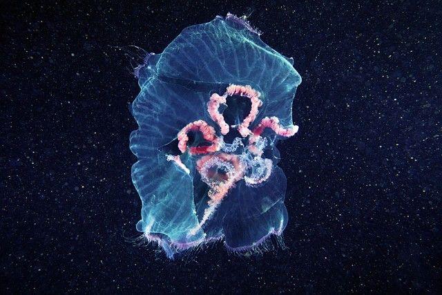 underwater-jellyfish-alexander-semenov-aquatis-1-2_e
