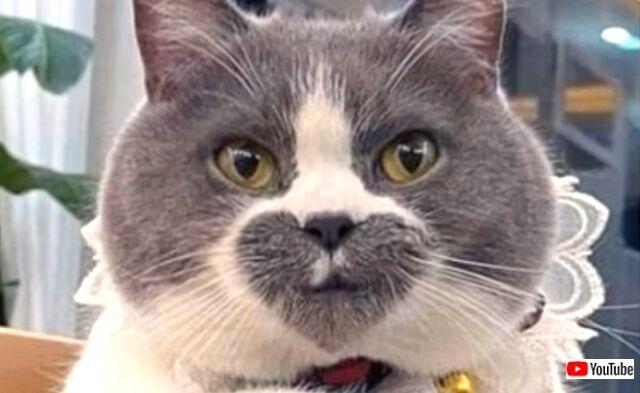 これは可愛い、珍しい!オンリーワンな見た目を持つ猫たちをいろいろ詰め合わせてみた