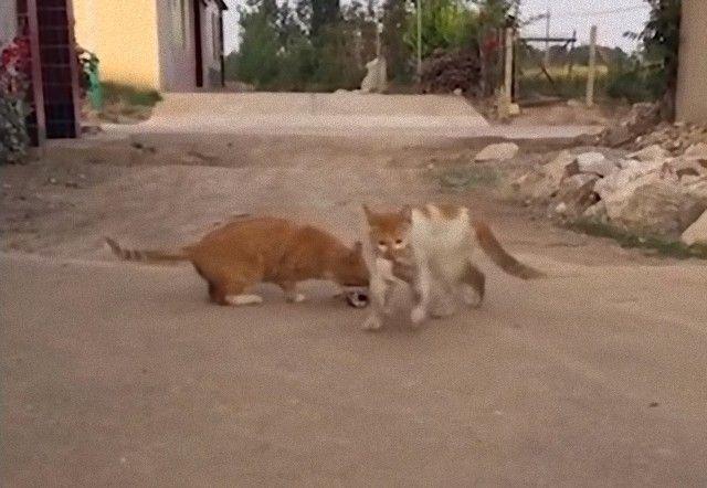 mothercats4_e