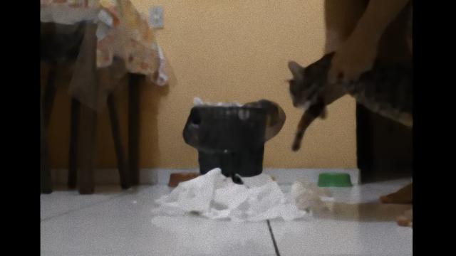 cat-2_e